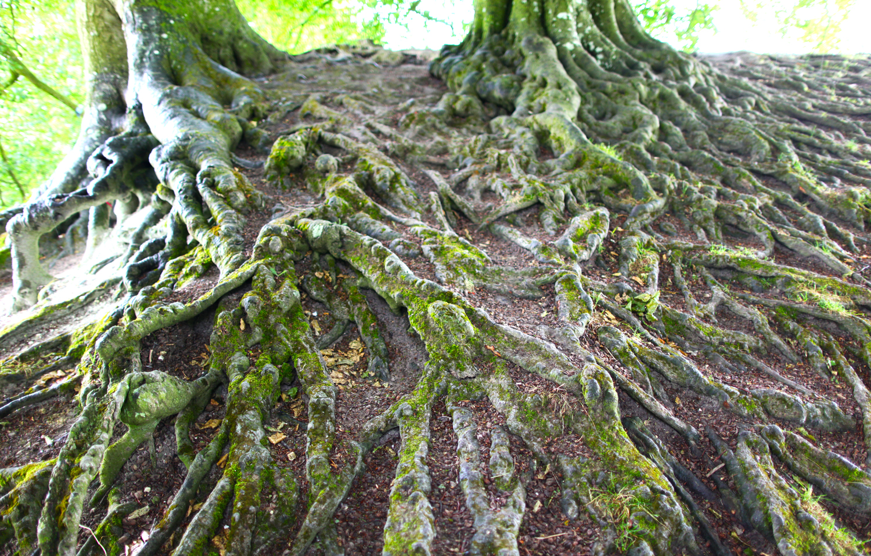 Feenbäume in Avebury